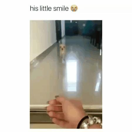 Собака улыбака :)