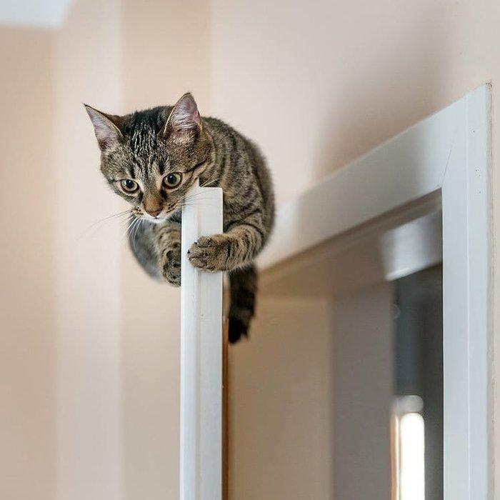 Вообще, Я очень смелый! Кот, Дверь, Пылесос