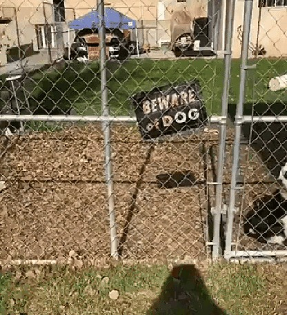 Осторожно собака Собака, Гифка, Надпись, Табличка, Забор