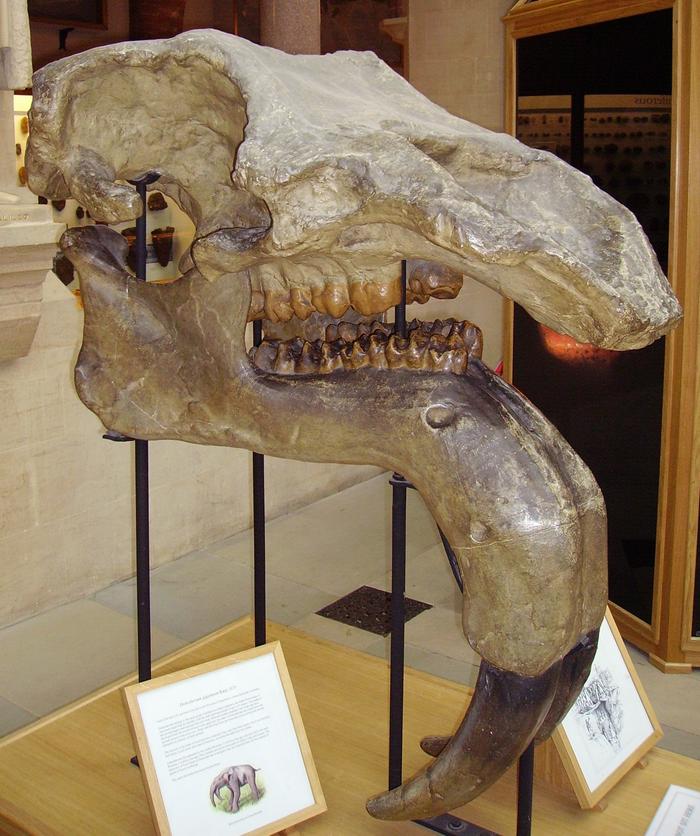 Ещё один фэнтезийный череп.Динотерий Палеонтология, Динотерий, Кайнозой, Череп, Скелет, Арт, Длиннопост
