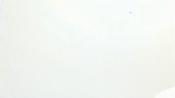 Священный ибис. Птицы, Орнитология, Зоология, Древний Египет, Бог Тот, Хордовые, Ибис, Гифка