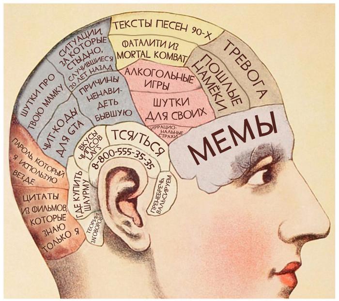 «Иногда мне интересно, что же у тебя в голове...» перевод, анатомия, Картинки