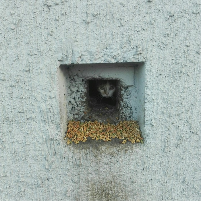 Подвальная кошка Кот, Подвал, Ужин, Фотография