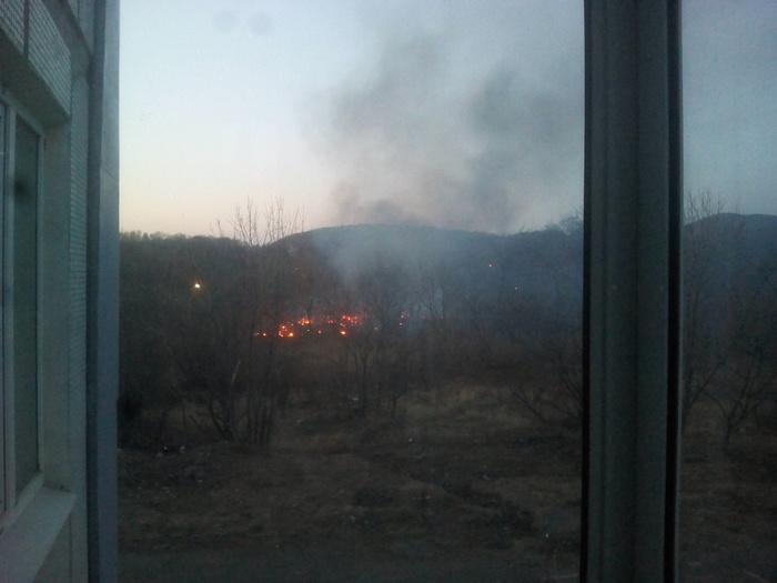 Выходишь, значица, такой на балкон подымить... Пожар, Лес, Фотография, Приморский край, Вид из окна