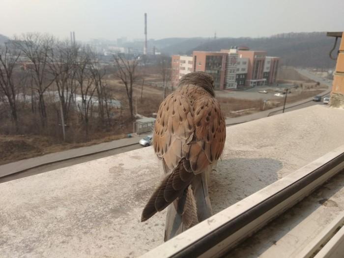 Птичка пришла просить помощи