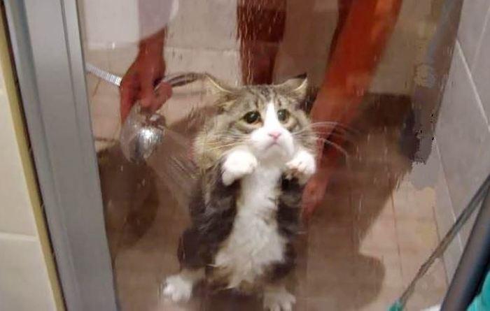 Помыть кота на американском сленге Кот, Сленг
