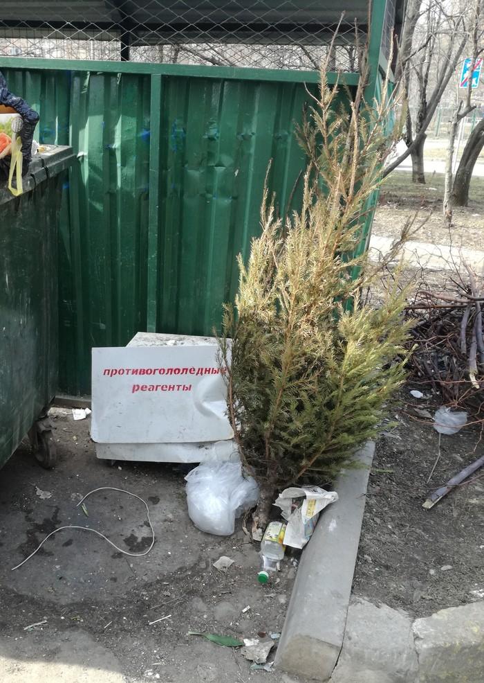 Ещё один сдался Выбросил елку, Слабак