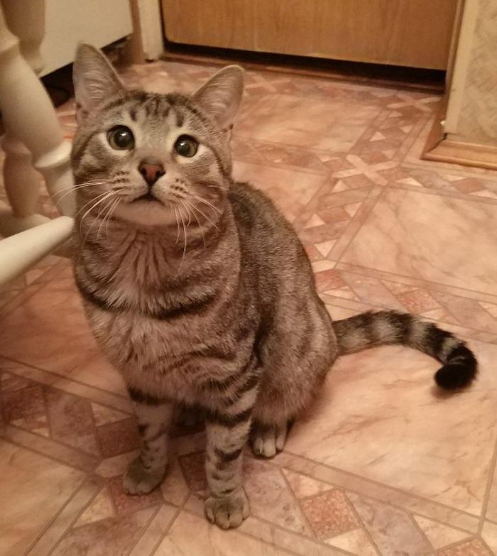 Котя ищет дом! Кот, В добрые руки, Кошка отдам бесплатно, Помощь, Москва, Московская область, Длиннопост, Без рейтинга
