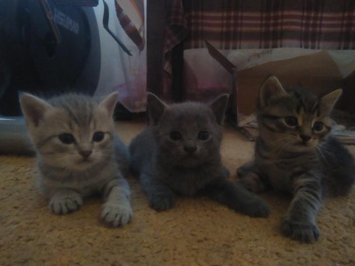 Три котика