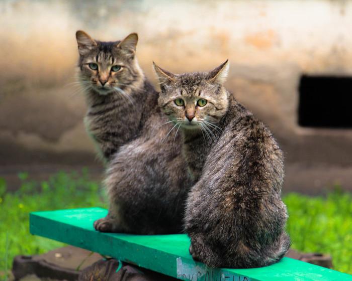 Две мурлыки Кот, Лето