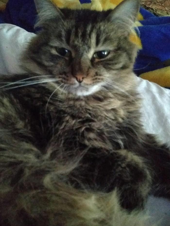 Когда кот реально соскучился =(~_~)= (лучше бы нет) Кот, Обосраться, Разлука