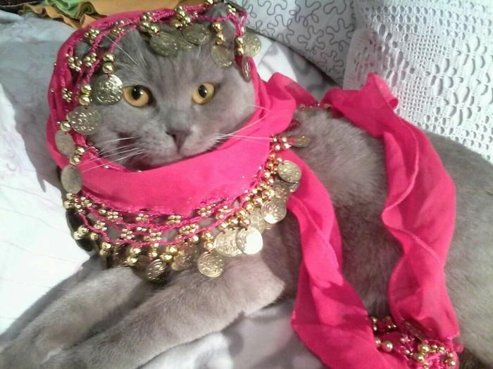 Арабская ноооочь,  о дивный востооооок... Кот, Британский кот, Тихон, Шахерезада, Арабская ночь