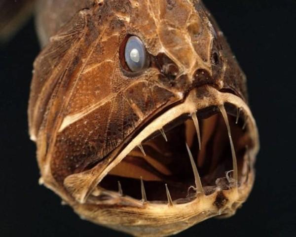 Самые страшные и опасные животные в мире длиннопост, Животные, Насекомые, Рыба, Краб, акула, змея, бегемот, опасность