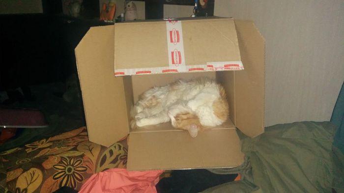 Коты... Кот, Зоомагазин, Коробка