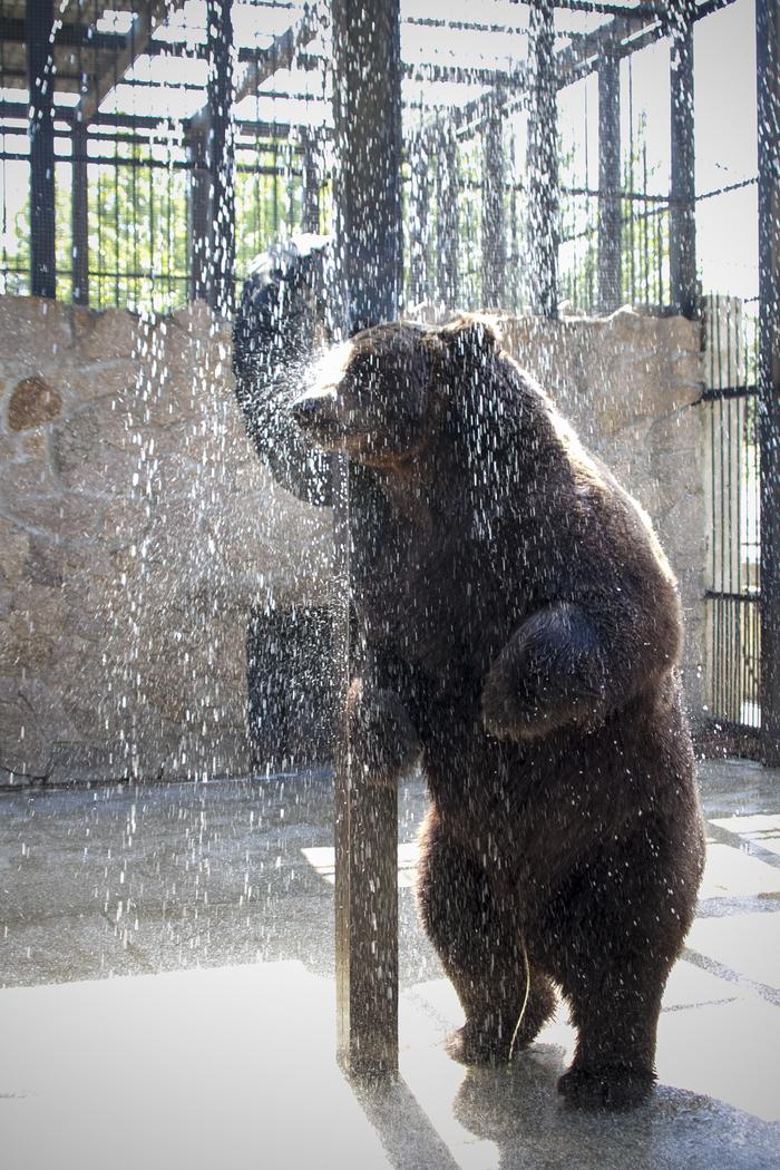 Ты не ты, когда утро Челябинский зоопарк, Медведь, Фотография, Зоопарк, Длиннопост, Челябинск, Душ