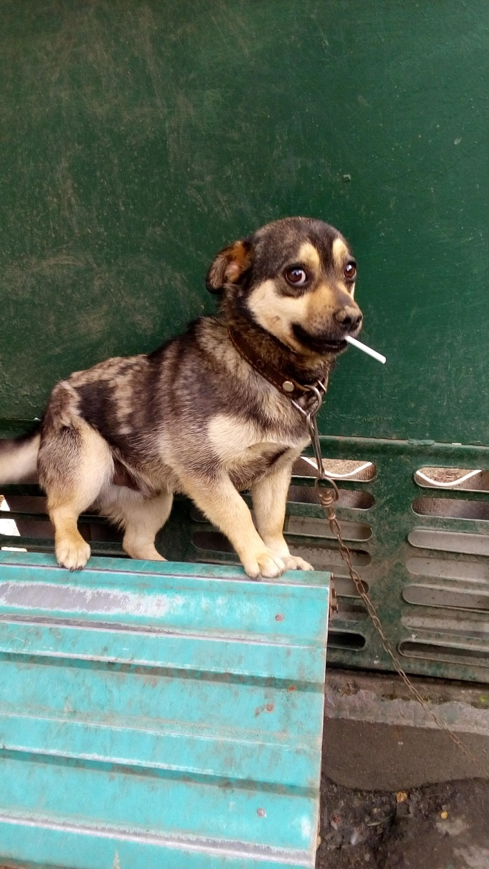 Приятный куни сделанный псом