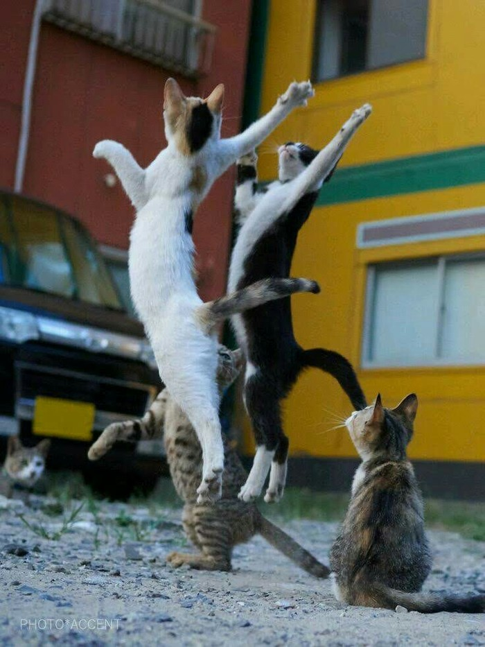 Уличный волейбол.