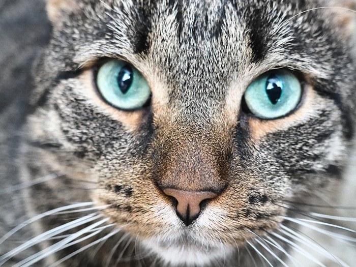 Мурзик. Нашли на улице, когда он был мелким. Сейчас, он радует нашу семью. Боевой кот. Начинающий фотограф, Взгляд, Olympus, Olympus pl7, Кот, Фотография