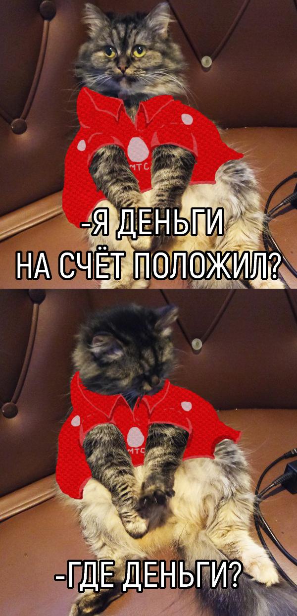 Извечное МТС, Деньги, Кот