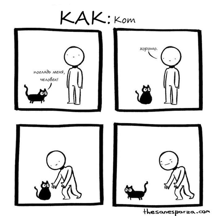 КАК: Кот