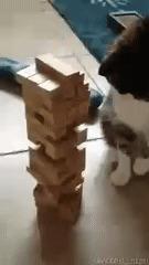 Дженга с котом? Почему бы и нет?