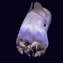 Самые необычные обитатели Марианской впадины Марианская впадина, Рыба, Интересное, Подводный мир, Осьминог, Океан, Акула, Длиннопост, Гифка