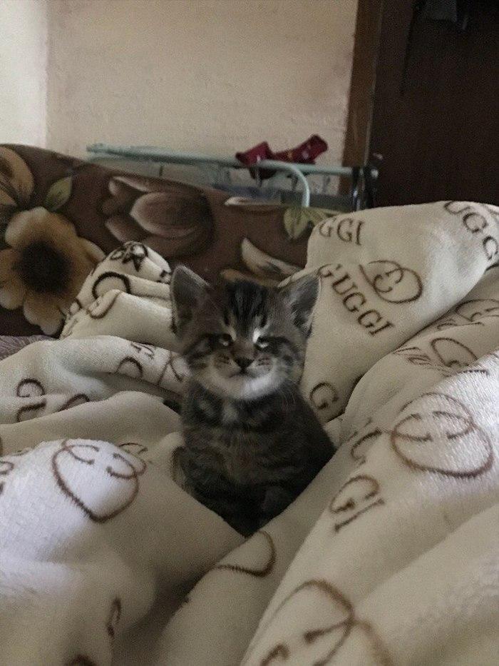 Привет, я Хёд! Кот, Слепой кот Хёд, Длиннопост