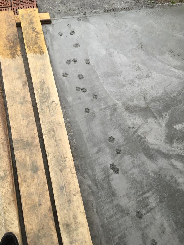 Ночью на крыльце залили раствор. фотография, бетон, Собака, следы