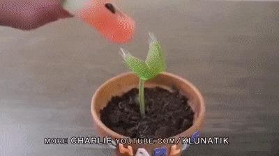 Я и мой друг Чарли