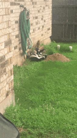 Сегодня у меня появились новые соседи
