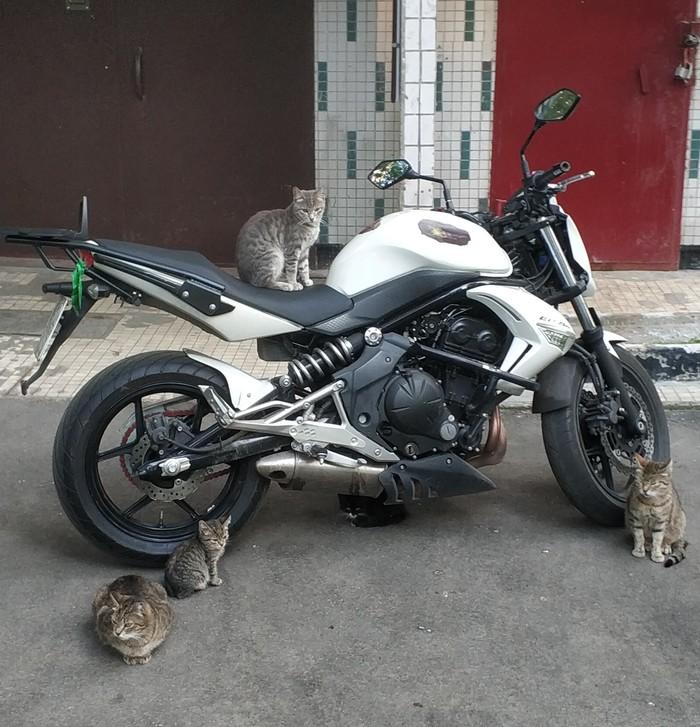 Улицы терроризирует банда котобайкеров Кот, Мотоциклы, Банда