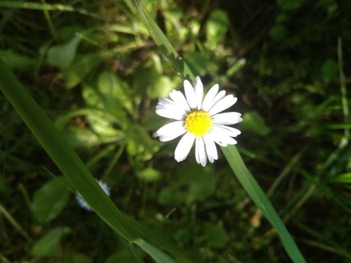 Цветочек Фотография, Природа, Цветы