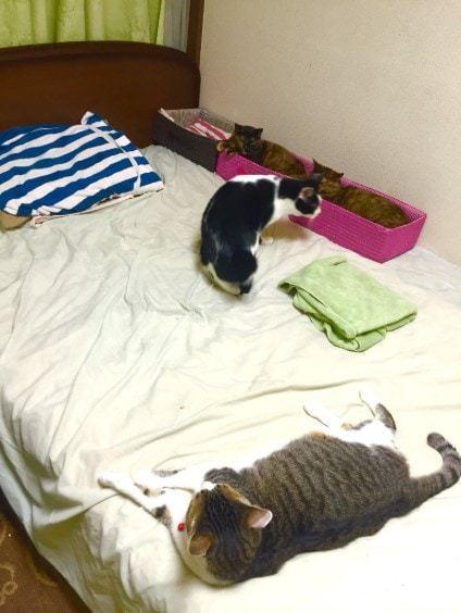 Как усмирить котиков от ночной охоты, шуршания и беготни Ноу-Хау, Кот, Коробка, Тыгыдык
