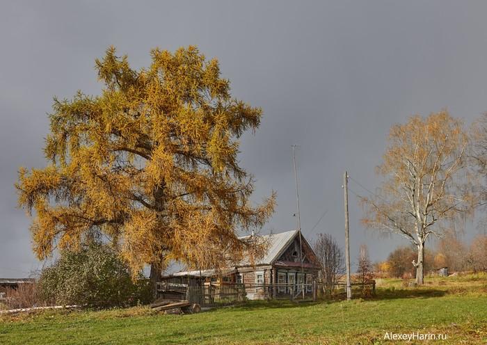 Хорошо иметь домик в деревне Осень, Деревня, Старый дом, Закат, Лиственница