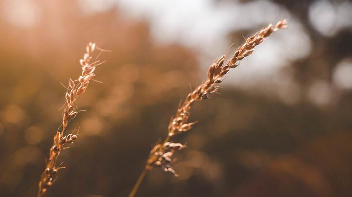 Летнего тепла вам Начинающий фотограф, Nikon, Nikon D70, Природа, Лето, Тепло, Пшеница, Гелиос 44-2
