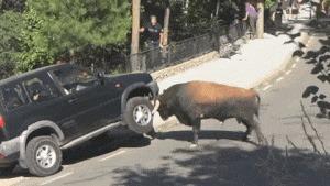 Наглядная иллюстрация к понятию «бычить»
