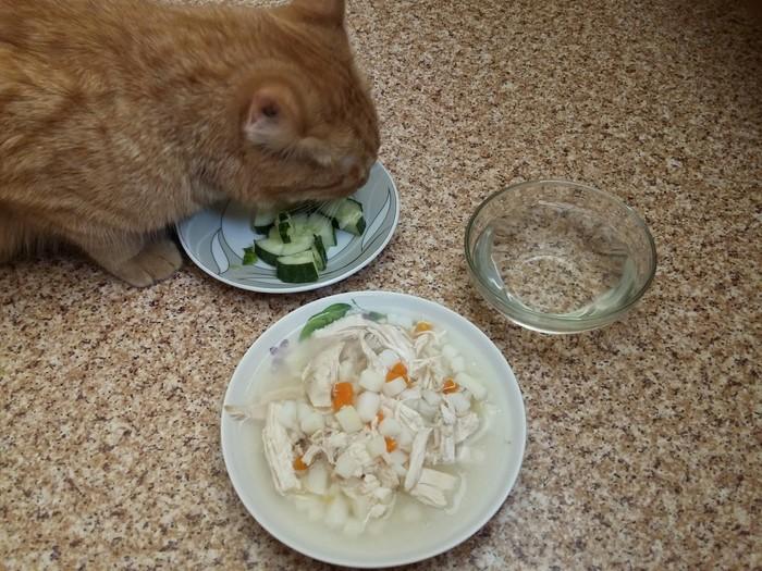 Кот веган? Кот, Животные, Огурцы, Овощи, Веганы