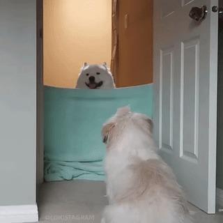 Собакен творит магию