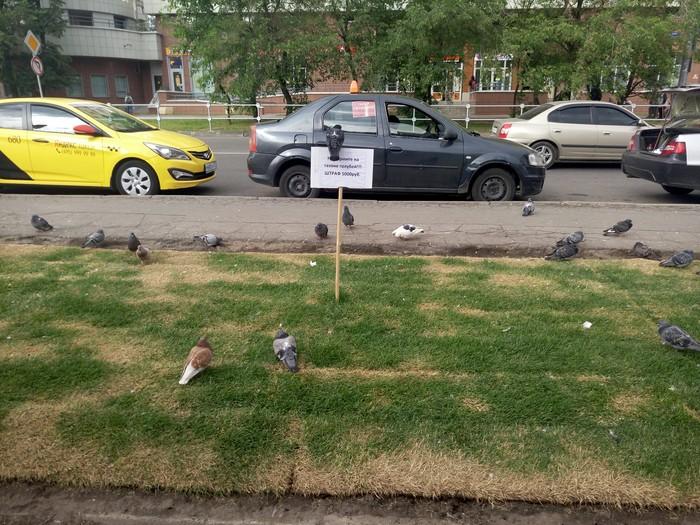 Не кормите голубей Голубь, Табличка, Штраф