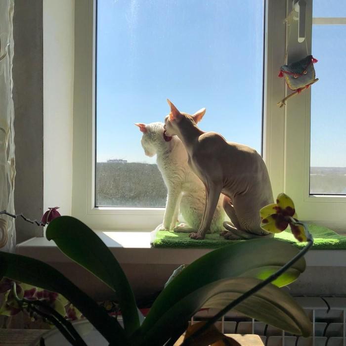 Кошки кот, забота, длиннопост