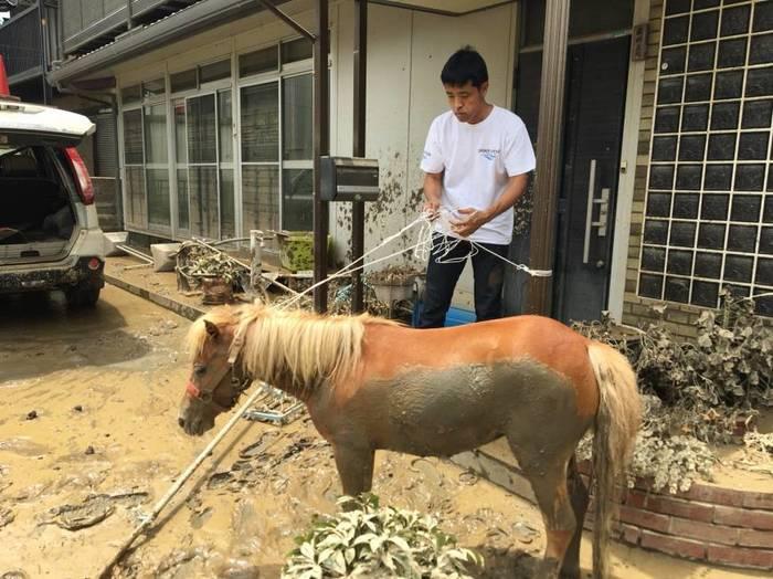 Японская Плотва: миниатюрная лошадка была найдена на крыше здания через три дня после исчезновения во время наводнения в Японии новости, фотография, Ведьмак, Япония, наводнение, спасение, лошадь, животные, длиннопост