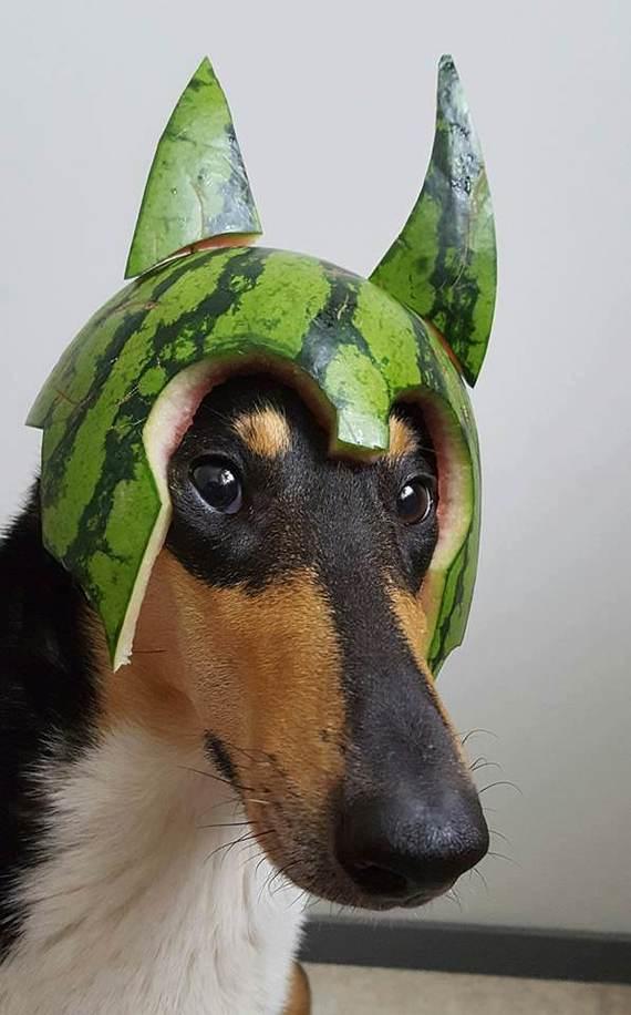 Фотошоп Баттл Собака, Photoshop, Картинки, Юмор, Длиннопост, Арбуз
