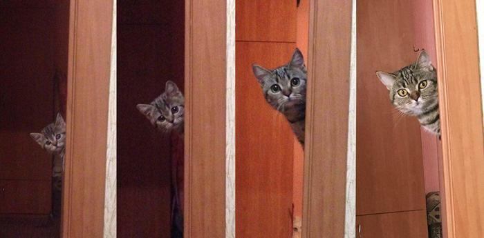 Взросление кота-шпиона