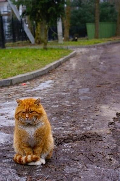 Грустный котейка