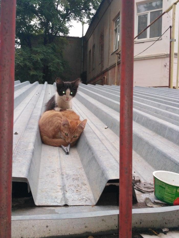 Братишки или сестрички Помощь животным, Саратов, Без рейтинга, Кот, Длиннопост