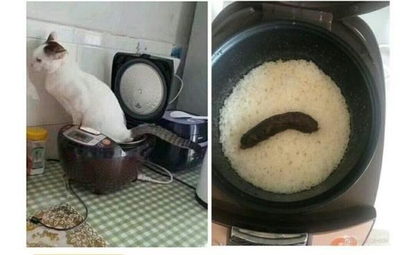 Cрать я хотел на ваш рис