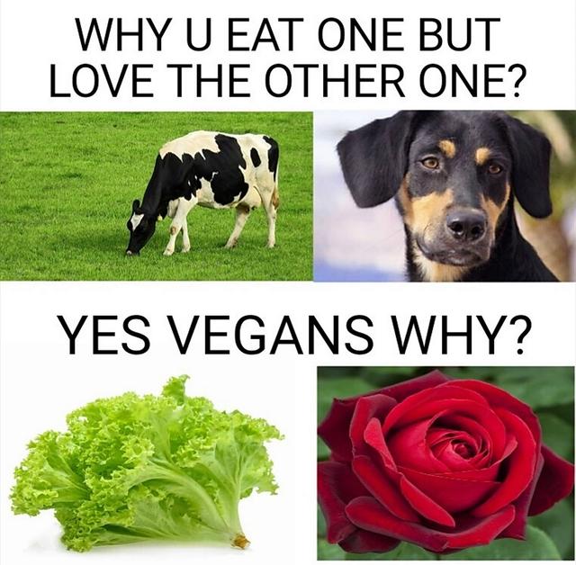 Хороший, кстати, вопрос вопрос, веганы, собака, Корова