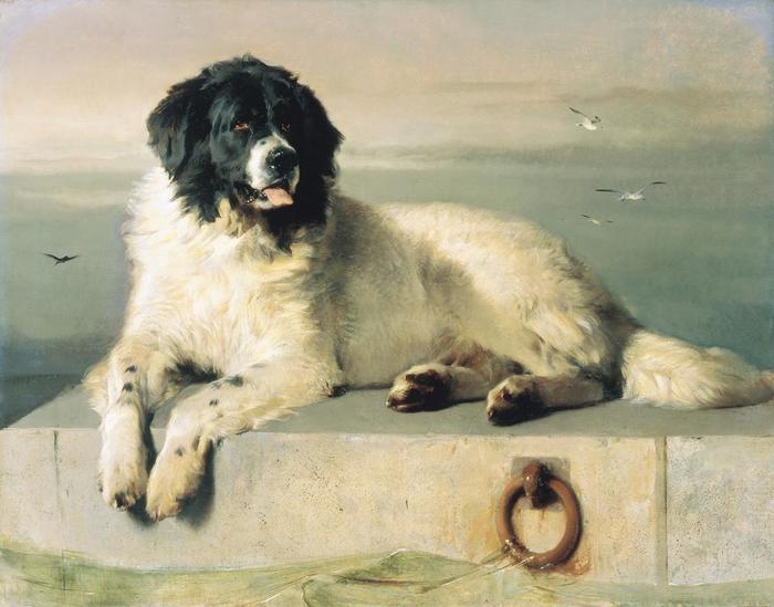 О породах собак. Ньюфаундленд; ландсир. Собака, Породы собак, Ньюфаундленд, Ландсир, Длиннопост, Животные, Домашние животные