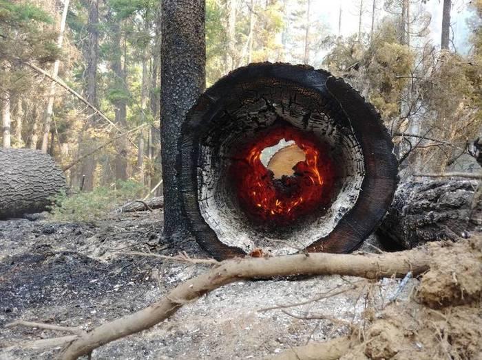 Пожар внутри дерева