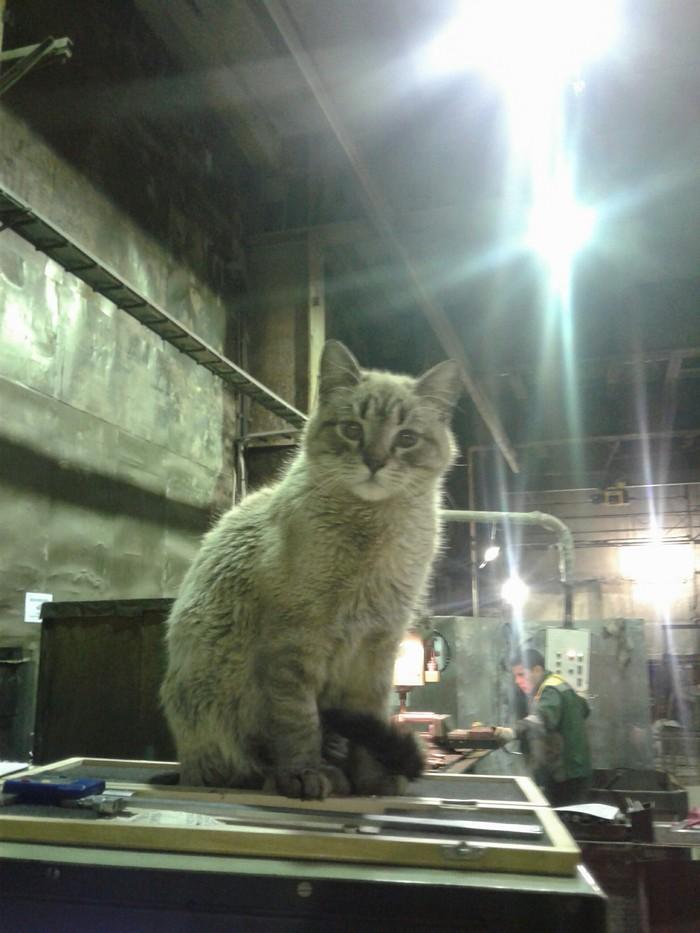 Заводской котяра кот, завод, фотография